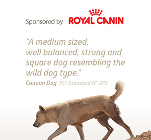 Sponsered By Royal Canin