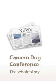 The Israel Canaan Dog Speciality Show