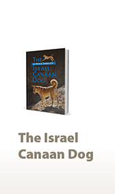 The Israel Canaan Dog